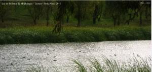 Lac de la ferme de Mr bourgas (بحيرة بورغاس) à Taoura- wilaya de Souk Ahras