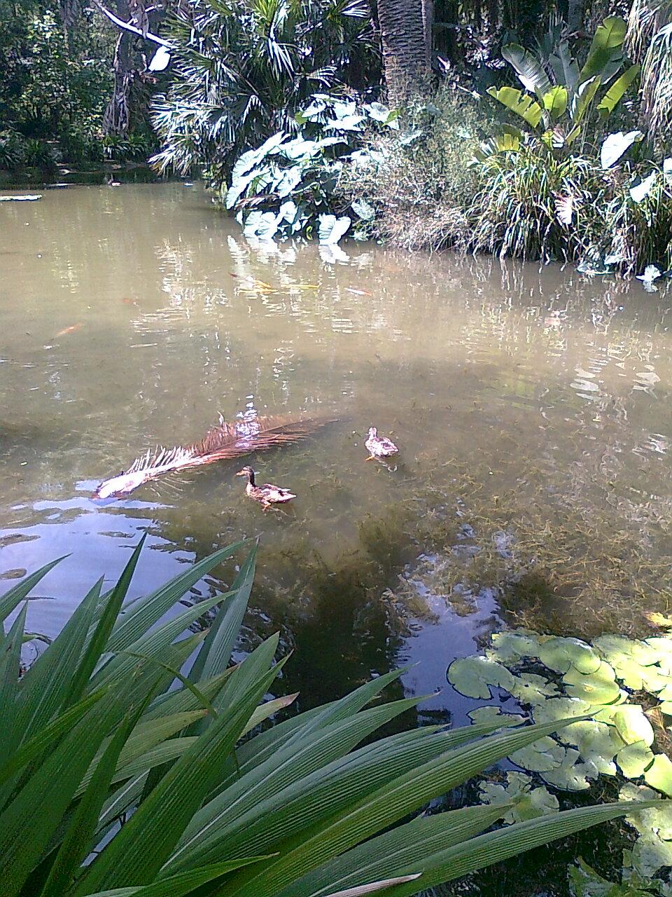 Marre d 39 eau au jardin d 39 essai alger for Marre de jardin