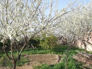 un champ ou un petit jardin de famille