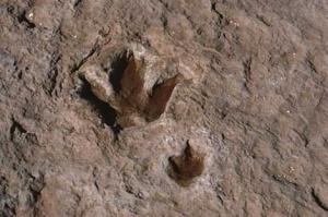 اكتشاف آثار أقدام ديناصورات تعود إلى 150 مليون سنة في البيض  