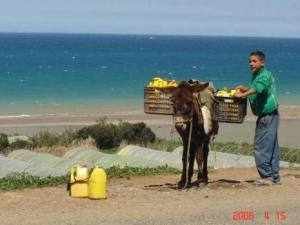 Tipasa - La problématique de l'eau
