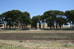 Cimetière chrétien de Mellakou, commune de la wilaya de Tiaret