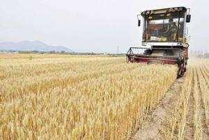 TEBESSA - Des agriculteurs récompensés pour de bons rendements agricoles