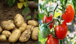 MOSTAGANEM - Agriculteurs cherchent main-d'œuvre désespérément…