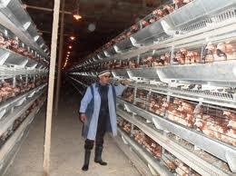 Algérie - Les vétérinaires tirent la sonnette d'alarme: «Il y a danger dans notre assiette!»