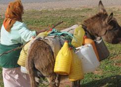 SKIKDA - La commission de wilaya pour la promotion de la femme rurale mise en place
