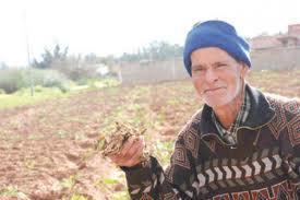 Mostaganem - Agriculture: La gelée dévaste les champs de patates (pomme de terre)