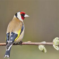"""Résultat de recherche d'images pour """"lacher oiseaux tlemcen"""""""