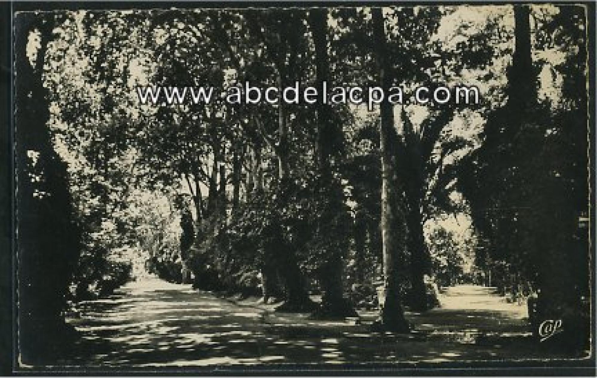 Sidi bel abbes le jardin public les all es for Jardin public 78