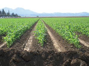 Mostaganem - Controverses autour de la mise à niveau de l'agriculture