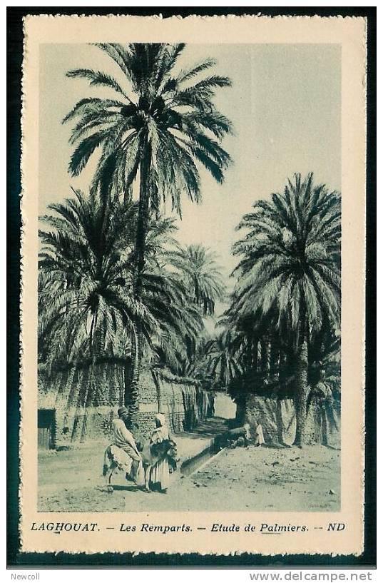 FW)14) Laghouat Les Remparts - Etude de Palmiers