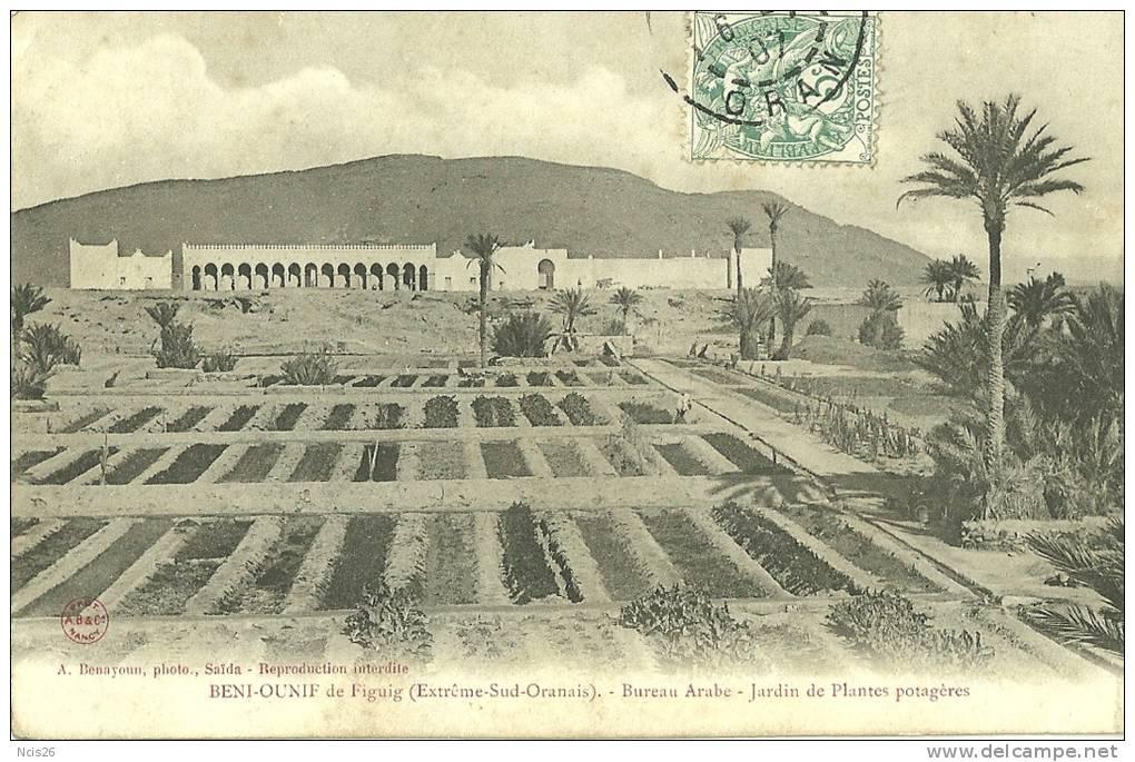 Algerie beni ounif de figig bureau arabe jardin de plantes potageres