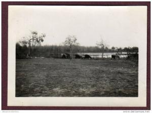 Belle photo ALGERIE 1932 - EL GOLEA - CHEVRES