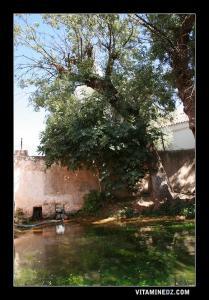 Source d'eau à Tafessra