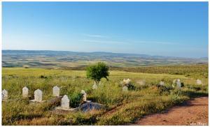 Hommage à nos défunts enterrés au Cimetière de Sidi Boussaïd