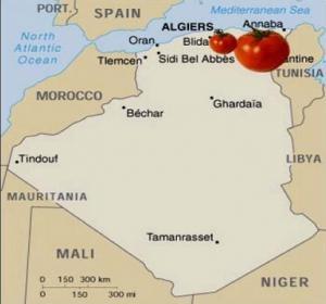 Visite de Rachid BenaÏssa à Guelma: Pour une mécanisation accrue de la culture des tomates