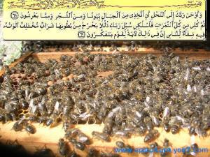 النحل و القران الكريم