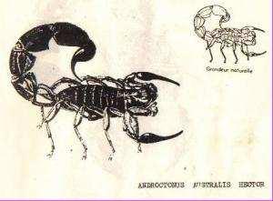 SIDI BEL-ABBÈS - 35 personnes mordues par des scorpions depuis le début du mois