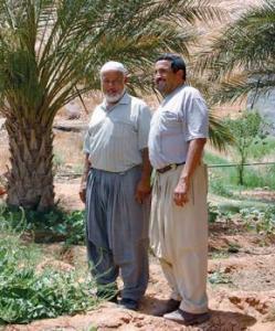 Ghardaïa - Le rituel de l'été et de l'automne dans le M'zab:  L'oasis séculaire