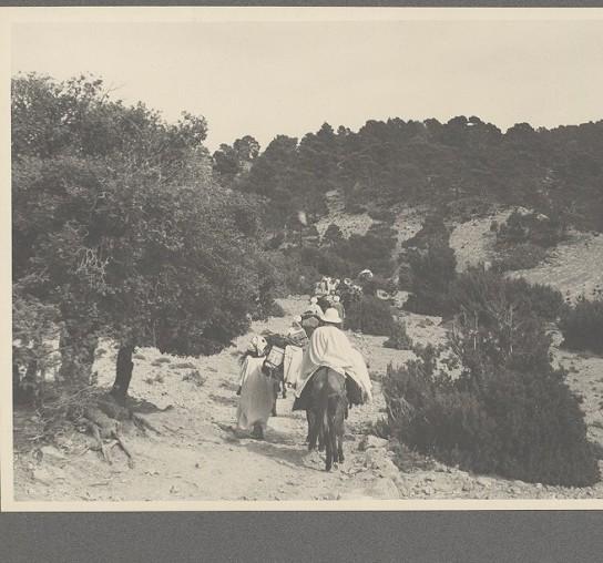 Titre d'origine : Forêt du djebel mezbel (douar tadjemout) AURES