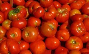 MOSTAGANEM - De la tomate en abondance