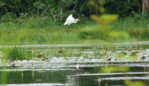 El Aouana (Jijel) - Parc national de Taza: Des espèces d'oiseaux à protéger