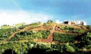 El Hadaik (Skikda) - Environnement agressé à Boulekroud 2: Des arbres abattus et des habitants révoltés