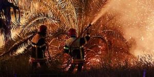 Tahart (Abalessa) - 340 palmiers dattiers ravagés par les flammes