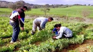 Bient�t des centres de formation agricole dans les wilayas de Mascara, El Oued et A�n Defla