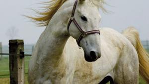 Filière équine : Tiaret se prépare à accueillir son salon du cheval