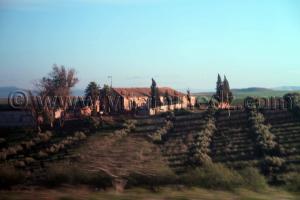 Ferme coloniale Sidi Bel Abbes - Commune de Sehala