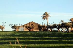 Ferme coloniale a Sidi Hamadouche (anciennement Les Trembles) Sidi Bel Abbes