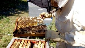 Recul de la production de miel d'agrumes à Blida (apiculteur)