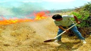 Souk Ahras met la dernière main au plan estival anti-feux de forêts