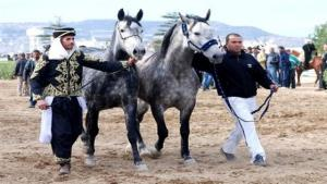 Tiaret - Renforcer la place du cheval barbe à l'échelle internationale (wali)