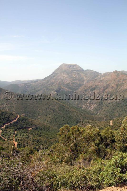 Hona�ne, Mont Tadjra lieu de naissance d'Abdelmoumen Ben Ali fondateur de la dynastie des Almohades.