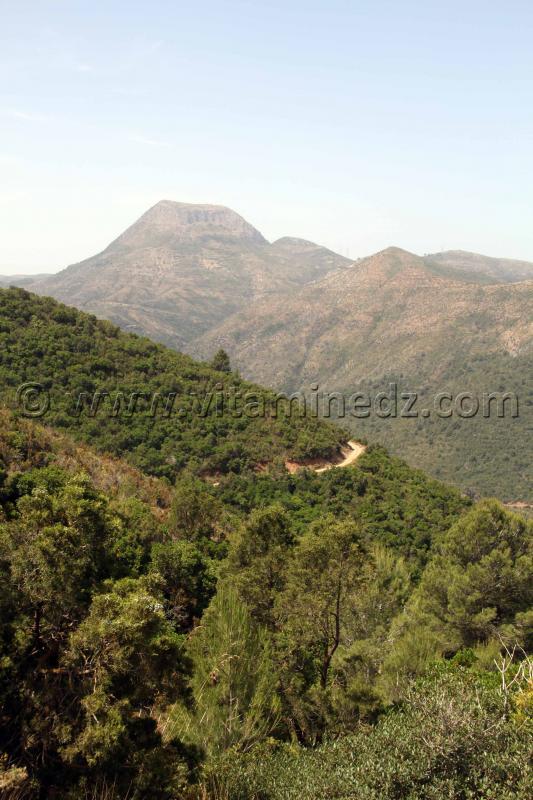La colline de Tajra surplond la ville de Honaine