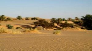 Diverses actions pour lutter contre la désertification dans la wilaya d'Adrar