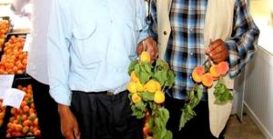 Djelfa - L'abricot en fête dans la ville de Messâad