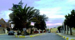 حي 150 مسكن بسكرة: حملة لا تمسوا ببيئتنا مبادرة مزعجة