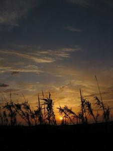 Un couché de soleil sur l'une des plages de Zeralda