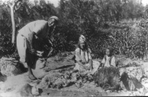 Photo Ancienne de Tlemcen tente de mouton