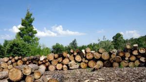 شليا مصدر الاخشاب الصنوبر والارز لمصارة