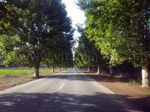 Route de Sidi Amar vers Cherchell (Caesarée)
