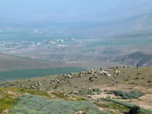 الراعي والغابة