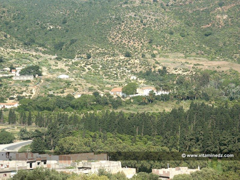 Ferme Coloniale a Beni Ghanam (Wilaya A�n T�mouchent)