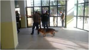 Scènes de Violence à l'INATAA de Constantine: Trente blessés dont dix par morsures de chiens