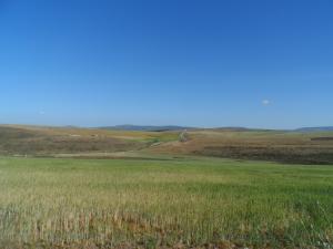 Constantine - La production de céréales menacée par la sécheresse