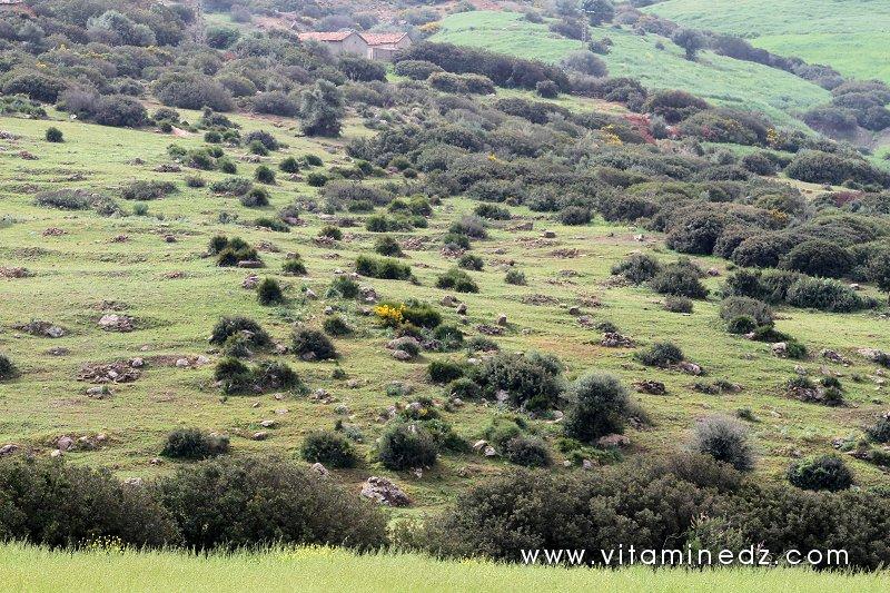 Le Diwan De Biskra - Algérie . Le Diwan De Biskra