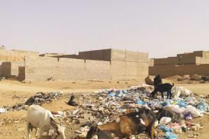 Tamanrasset - Radar: Arrêt sur image Les parcours de nos chèvres